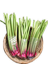 rhubarb_green
