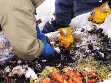 大変な作業のため信濃町でも雪中野菜の栽培に取り組む農家は数えるほどです