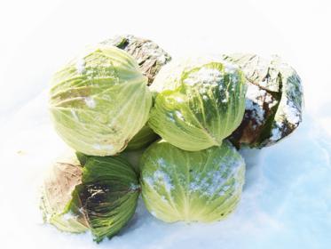 雪の中に隠れた冬の宝物「雪中野菜」を是非お試しください♪