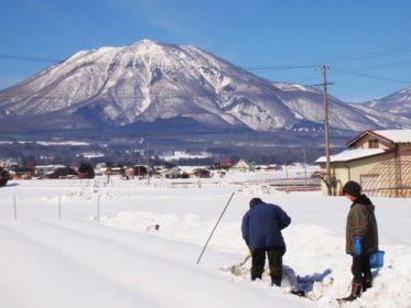 信濃町は特別豪雪地帯に指定される積雪量の多い土地です