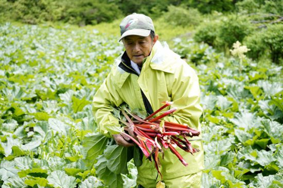 rhubarb2018_05_21_01
